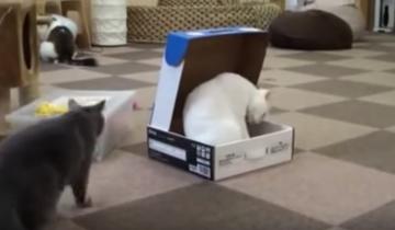 Кот убирает с пути своего конкурента!