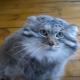 Все домашние кошки произошли от этого кота!