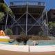 Кошка занимается серфингом верхом на собаке!