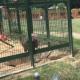 Девочки обижали бабуина в зоопарке, и он им отомстил!