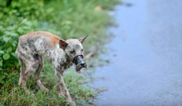 Снимая липкую ленту с морды собаки, спасатели думали, что ей уже не жить