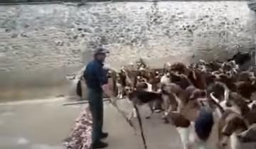 Как происходит одновременное кормление сотни охотничьих собак