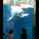Кит белуха играет с детишками в океанариуме!