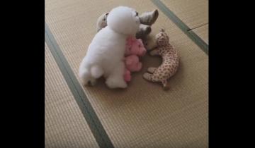 Если вы думаете, что это все игрушки, тогда вы ошибаетесь