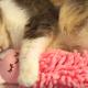 Кот обнял любимую игрушку и крепко заснул