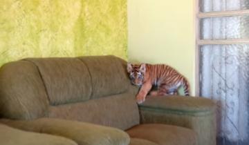 С таким домашним животным лучше поберечь мебель!