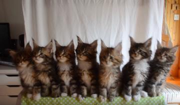 Самые синхронные котята в мире!