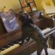 Новая подборка самых забавных эпизодов с собаками!