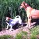 Забавные собаки играют в прятки!