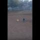 Важная курица вышагивает в голубых штанишках!