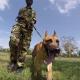 Рабочий день пса, который защищает носорогов