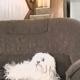 Она накрыла собачку одеялом, а когда убрала его….