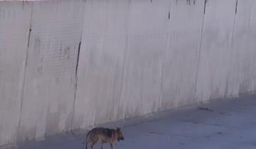 Этот парень погладил бездомного пса