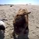 Если эта двуногая собака Вас не впечатлит, Вы безнадежны