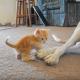 Котенок долго доставал этого питбуля, пока пес не выдержал