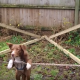 Да это самая талантливая собака из всех, что я видела!