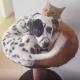 Вот, как выглядит дружба между кошкой и собакой!