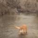 Олень танцует перед собакой, но та не обращает внимание