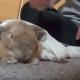 Кролик не может оставаться без ласки