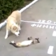 Хитрый кот притворился мертвым