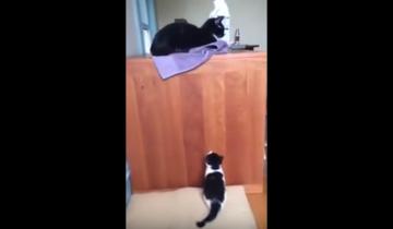 Маленький котенок не может попасть к маме!