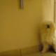 Испуганная собачка, которую нужно было только обнять!