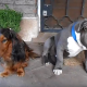 Как узнать, кто из собак погрыз тапку?
