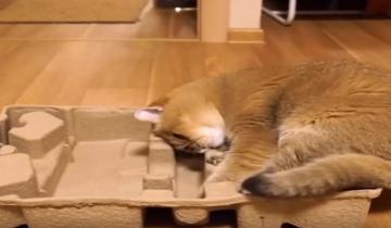 Кот старается поудобнее устроиться в коробке!