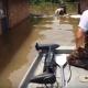 Собака боялась утонуть и в страхе держалась за забор