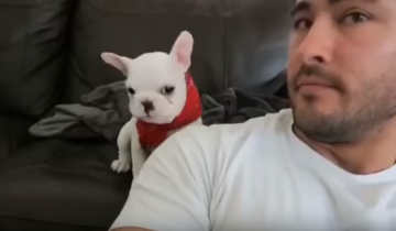 Собака-модница обожает комплименты!