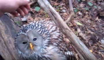 Он собирал грибы в лесу и вдруг увидел сову