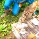 Кот сидит в засаде