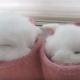 Кролики облюбовали меховые сапожки хозяйки