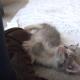 Котенок и щенок быстро подружились