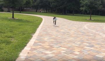 Эта собака бежит за почтой, потому что очень хочет гулять!