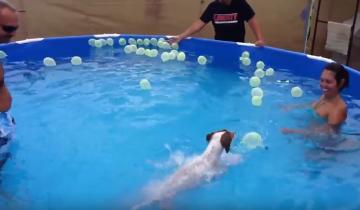 Собака против шариков!