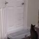 Кошка, которая открывает любые двери без проблем!