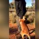 Маленький кенгуру обнимает своего хозяина