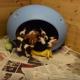 Маленький домик для маленьких щенков!