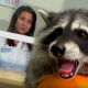 В медицинский центр принесли на обследование енота!