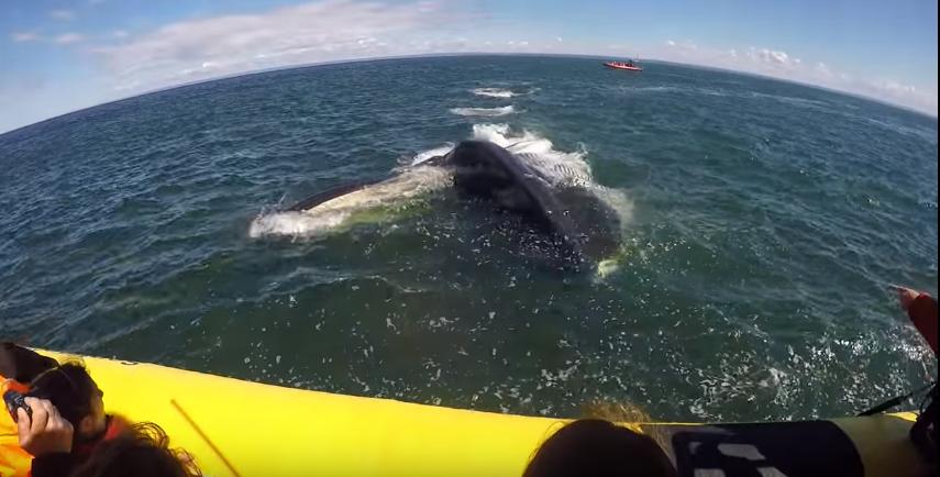 лодка а под ней кит