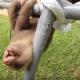 Маленький ленивец пытается что-то сказать