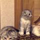 Этот котенок так заразительно зевает!