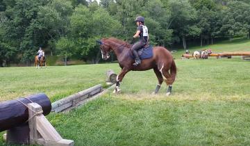 Лошадь, увидев перед собой небольшое препятствие, такое учудила …