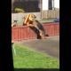 Хозяин долго не мог понять, кого ждет его собака у калитки