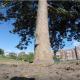 Белка украла камеру GoPro и сняла сюжет своей жизни