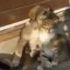 Щенок и котенок ласкаются. Обязательно смотреть до конца!