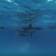 Неземная красота прогулки с дельфинами!