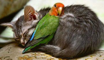 Попугаи против котов. Забавная подборка с домашними питомцами