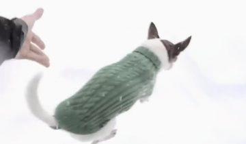 Почему собачек чихуахуа постоянно носят на руках, и почему они не бегают по снегу?